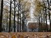 Herfst op het Lange Voorhout