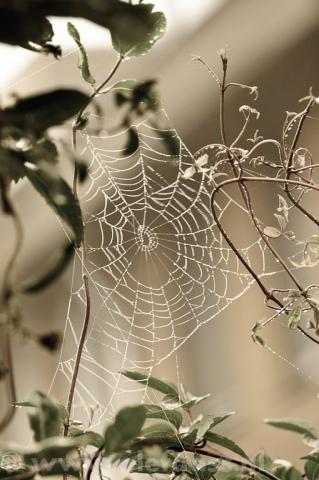 spinnenweb-1-van-3